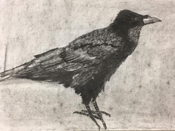 Tekenkunst  afbeelding 1
